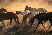 HOR 01 RK0351 02