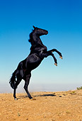 HOR 01 RK0372 42
