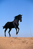 HOR 01 RK0384 04