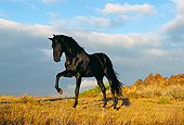 HOR 01 RK0394 15