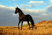HOR 01 RK0394 16