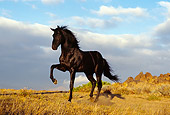 HOR 01 RK0394 17