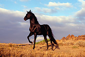 HOR 01 RK0394 18