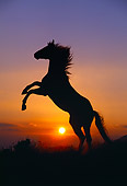 HOR 01 RK0406 23