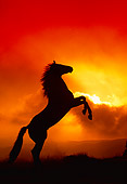 HOR 01 RK0408 12