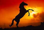 HOR 01 RK0410 15