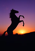 HOR 01 RK0417 02