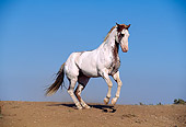 HOR 01 RK0507 16