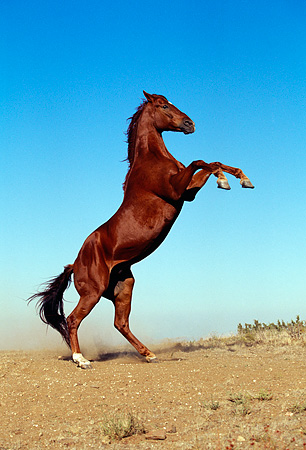 wild horse muslim dating site A number of hypotheses exist on many of the key issues regarding the domestication of the horse  sites in contrast, wild horse bones  muslim warriors of the .