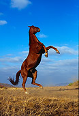 HOR 01 RK0538 38