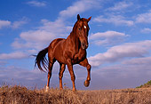 HOR 01 RK0546 03