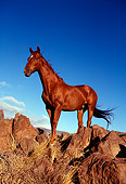 HOR 01 RK0577 17