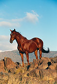 HOR 01 RK0578 03