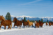 HOR 01 RK0591 26