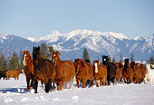 HOR 01 RK0591 29