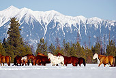 HOR 01 RK0601 08