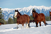 HOR 01 RK0601 18