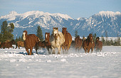 HOR 01 RK0601 46
