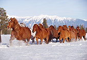 HOR 01 RK0604 02