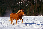 HOR 01 RK0607 04