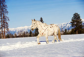 HOR 01 RK0613 01