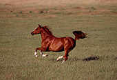 HOR 01 RK0619 07