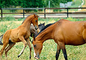 HOR 01 RK0635 04