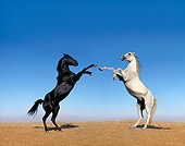 HOR 01 RK0659 04