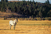 HOR 01 RK0665 03