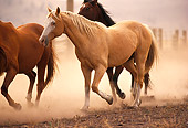 HOR 01 RK0679 03
