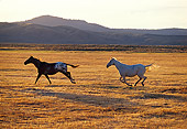 HOR 01 RK0690 01