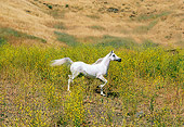 HOR 01 RK0696 27