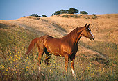 HOR 01 RK0697 09