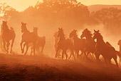HOR 01 RK0715 24