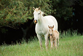 HOR 01 RK0751 17