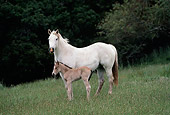 HOR 01 RK0751 42