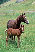 HOR 01 RK0769 01