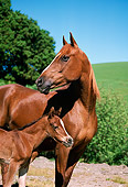 HOR 01 RK0786 02