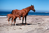 HOR 01 RK0803 25