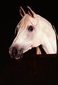 HOR 01 RK0806 01