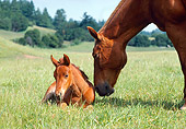 HOR 01 RK0834 02