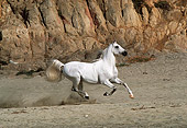 HOR 01 RK0854 17