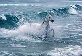 HOR 01 RK0863 06