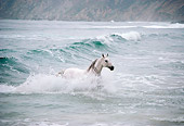 HOR 01 RK0863 09