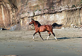 HOR 01 RK0869 07