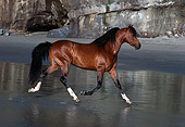 HOR 01 RK0869 32