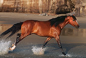 HOR 01 RK0869 34