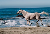 HOR 01 RK0870 02