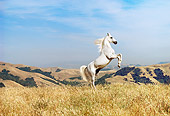 HOR 01 RK0900 16