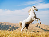 HOR 01 RK0900 18